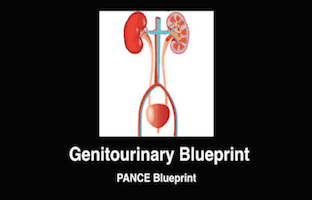 Genitourinary, GU, Renal, Kidney, PANCE Review Courses, PANRE Review Courses, PANCE Review, PANRE Review, PANCE, PANRE, Physician Assistant, NCCPA Blueprint, COMLEX, USMLE, Free CME, CME