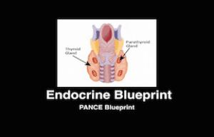Endocrine, PANCE Review Courses, PANRE Review Courses, PANCE Review, PANRE Review, PANCE, PANRE, Physician Assistant, NCCPA Blueprint, COMLEX, USMLE, Free CME, CME